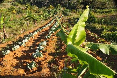 Séminaire autour de la petite agriculture familiale en Guadeloupe (Petit-Bourg, 22 et 29 aout 2017)