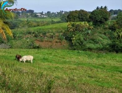 Un déconfinement au goût amer pour la petite agriculture familiale guadeloupéenne (26 02 2021)