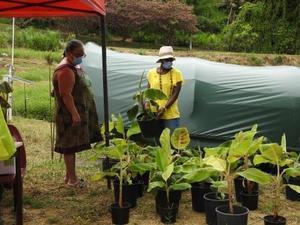 AgroEcodiv Visite exploitation pilote  Vente de plants et de produits végétaux Duclos Petit-Bourg  11 05 2021 MJM URZ (11)