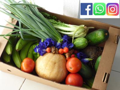 L'agriculture familiale à l'épreuve de la Covid-19 : le cas de la Guadeloupe, août 2021