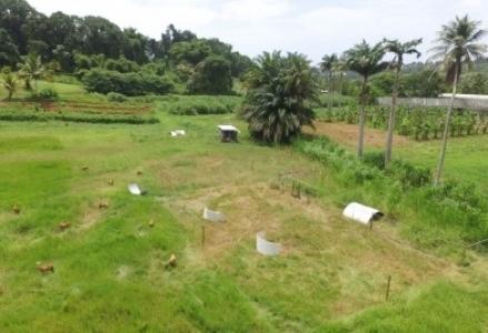 Microfermes en Guadeloupe, la transition agroécologique en route 14 septembre 2021